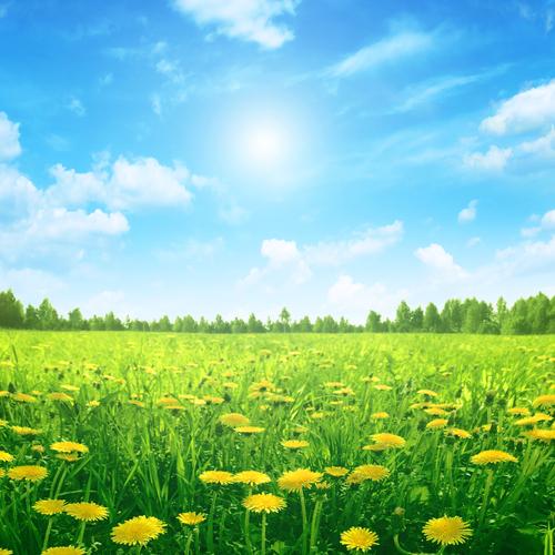 Développement durable : Respect de l'environnement